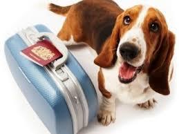 perro maleta
